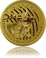 Bulking Elk (röhr...
