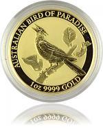 Birds of Paradise...