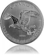 Bald Eagle (Weiss...